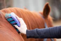 praca w stadninie koni
